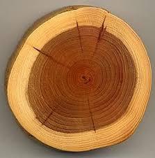 تعریف چوب و نقش آن در تجارت