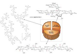 Wood Image 300x213 - تعریف چوب و نقش آن در صنعت