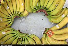 قیمت عمده فروشی انواع میوه و صیفی/ هر کیلو موز 27 تا 32 هزار تومان