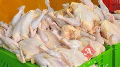 مصوبه مرغی ستاد تنظیم بازار/ کمیته ساماندهی بازار مرغ و تخممرغ تشکیل میشود