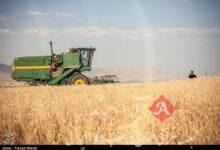 «معجزه آبخیزداری»|خودکفایی در تولید محصول استراتژیک گندم با آبخیزداری و آبخوانداری