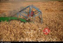 بیش از یکسوم بذر محصولات زراعی توسط شبکههای تعاونی تولید میشود