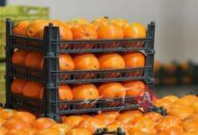 تنظیم بازار میوه شب عید به تشکلها سپرده شود