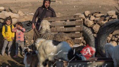 عشایر با خشکسالی سختی مواجه هستند/ درخواست کمک از دولت برای کوچ ماشینی عشایر