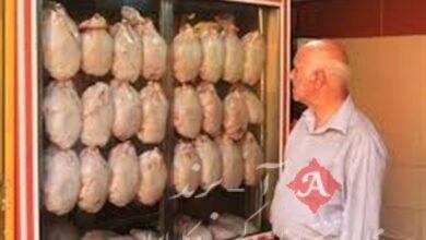 مرغداران: تولید مرغ بالا رفت؛ نگران کاهش قیمت به زیر نرخ مصوب هستیم