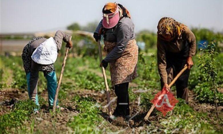 پرداخت بیش از 24 هزار میلیارد ریال تسهیلات اشتغال روستایی