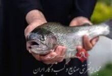 پیشنهاد خرید تضمینی ماهیان سردآبی روی میز مجلس