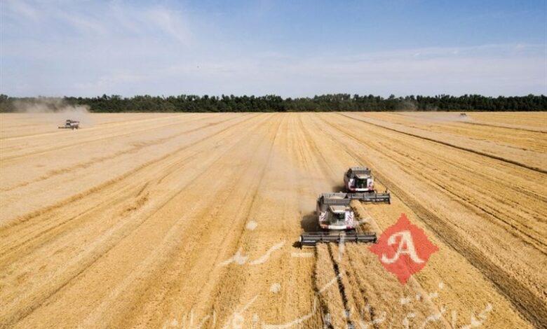 پیشنهاد قیمت 5842 تومانی کشاورزان برای خرید تضمینی گندم